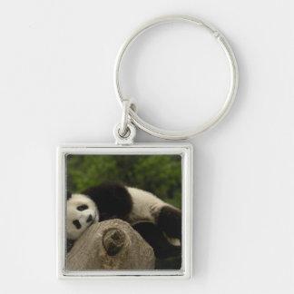 Giant panda baby Ailuropoda melanoleuca) 13 Silver-Colored Square Keychain