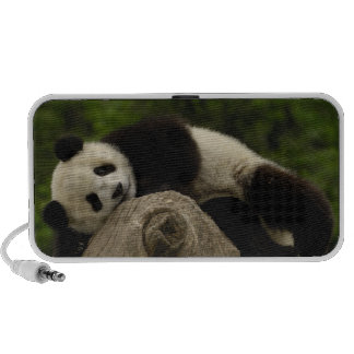 Giant panda baby Ailuropoda melanoleuca) 13 Laptop Speaker