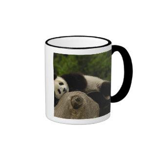 Giant panda baby Ailuropoda melanoleuca) 13 Coffee Mug
