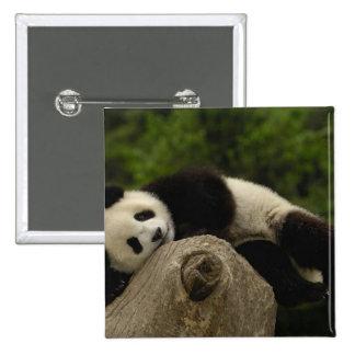 Giant panda baby Ailuropoda melanoleuca) 13 Pinback Button