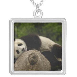 Giant panda baby Ailuropoda melanoleuca) 13 Square Pendant Necklace