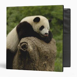 Giant panda baby Ailuropoda melanoleuca) 2 Binders