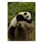 Giant panda baby Ailuropoda melanoleuca) 2 Greeting Card