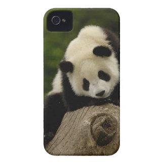 Giant panda baby (Ailuropoda melanoleuca) 2 iPhone 4 Case-Mate Case