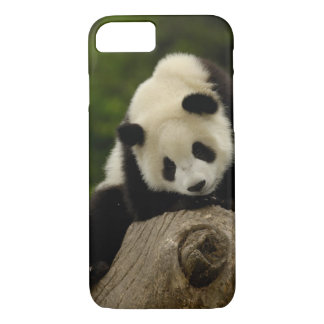Giant panda baby (Ailuropoda melanoleuca) 2 iPhone 8/7 Case