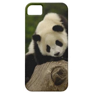 Giant panda baby (Ailuropoda melanoleuca) 2 iPhone SE/5/5s Case