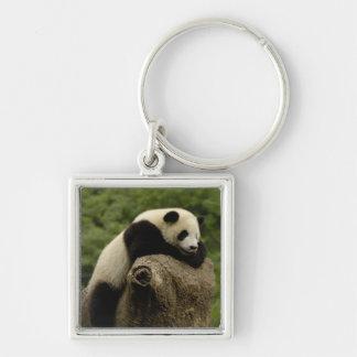 Giant panda baby Ailuropoda melanoleuca) 2 Silver-Colored Square Keychain