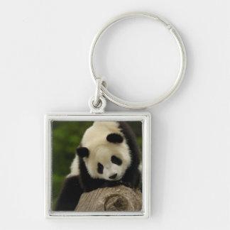 Giant panda baby (Ailuropoda melanoleuca) 2 Silver-Colored Square Keychain