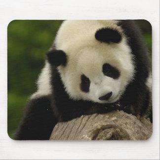 Giant panda baby (Ailuropoda melanoleuca) 2 Mousepads