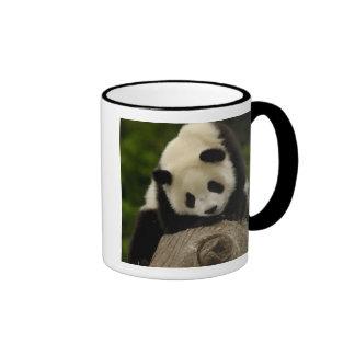 Giant panda baby (Ailuropoda melanoleuca) 2 Coffee Mugs