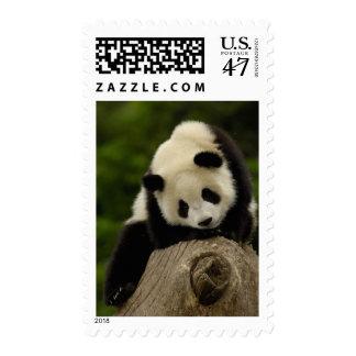 Giant panda baby (Ailuropoda melanoleuca) 2 Postage