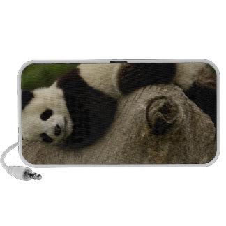 Giant panda baby Ailuropoda melanoleuca) 3 iPhone Speaker