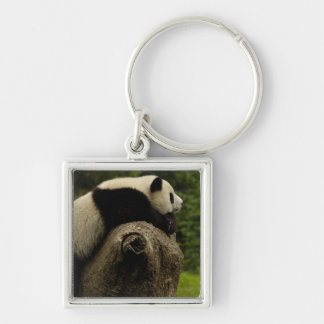 Giant panda baby (Ailuropoda melanoleuca) 3 Silver-Colored Square Keychain