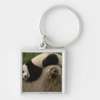 Giant panda baby Ailuropoda melanoleuca) 3 Silver-Colored Square Keychain
