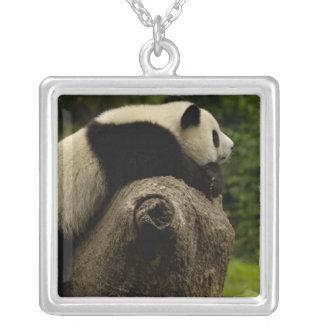 Giant panda baby (Ailuropoda melanoleuca) 3 Silver Plated Necklace