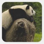 Giant panda baby (Ailuropoda melanoleuca) 3 Square Sticker