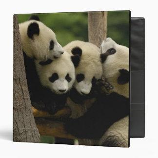 Giant panda baby Ailuropoda melanoleuca) 4 3 Ring Binder