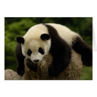 Giant panda baby (Ailuropoda melanoleuca) 4 Card