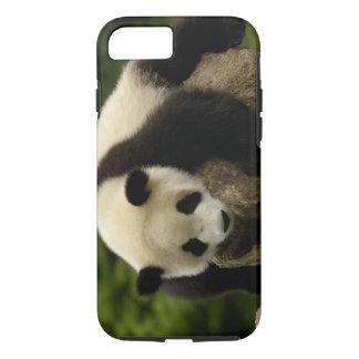 Giant panda baby (Ailuropoda melanoleuca) 4 iPhone 8/7 Case