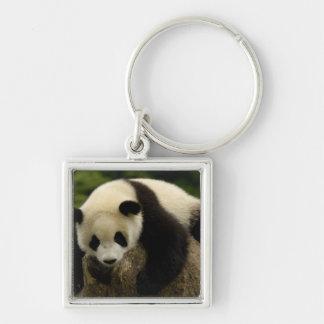 Giant panda baby (Ailuropoda melanoleuca) 4 Silver-Colored Square Keychain