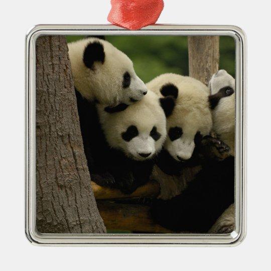 Giant panda baby Ailuropoda melanoleuca) 4 Metal Ornament
