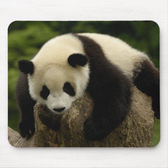 Giant panda baby (Ailuropoda melanoleuca) 4 Mouse Pad