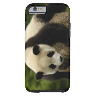 Giant panda baby (Ailuropoda melanoleuca) 4 Tough iPhone 6 Case