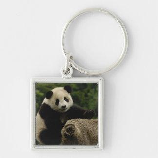 Giant panda baby Ailuropoda melanoleuca) 6 Silver-Colored Square Keychain