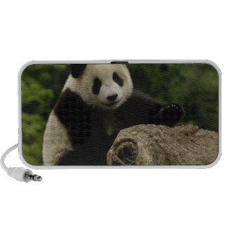 Giant panda baby Ailuropoda melanoleuca) 6 Notebook Speakers