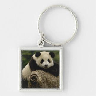 Giant panda baby Ailuropoda melanoleuca) 7 Silver-Colored Square Keychain