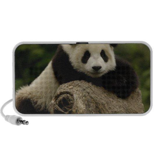 Giant panda baby Ailuropoda melanoleuca) 7 Mini Speaker