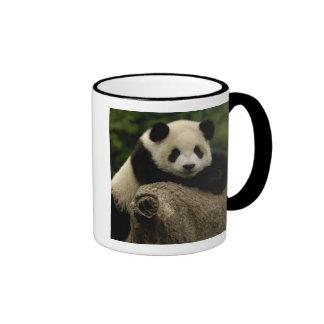 Giant panda baby Ailuropoda melanoleuca) 7 Mug