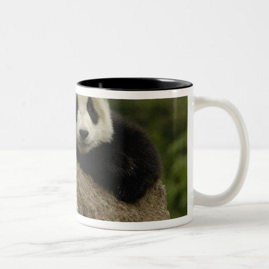 Giant panda baby Ailuropoda melanoleuca) 7 Two-Tone Coffee Mug