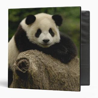 Giant panda baby Ailuropoda melanoleuca) 7 Vinyl Binder