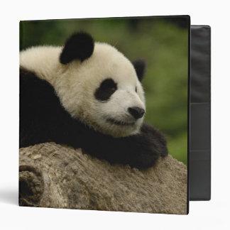 Giant panda baby Ailuropoda melanoleuca) 8 3 Ring Binder