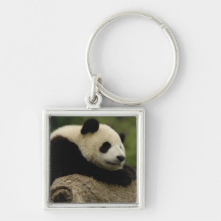 Giant panda baby Ailuropoda melanoleuca) 8 Silver-Colored Square Keychain