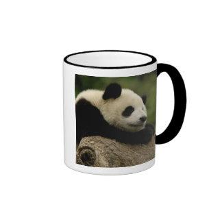 Giant panda baby Ailuropoda melanoleuca) 8 Mug