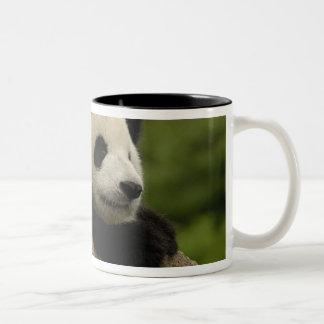 Giant panda baby Ailuropoda melanoleuca) 8 Coffee Mugs