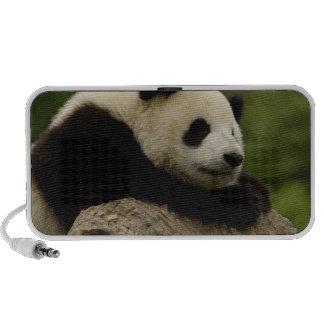 Giant panda baby Ailuropoda melanoleuca) 8 iPhone Speaker