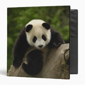 Giant panda baby Ailuropoda melanoleuca) 9 3 Ring Binder