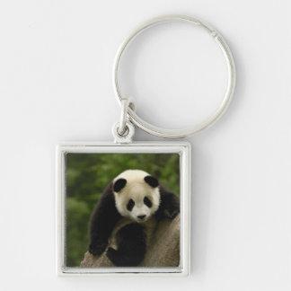 Giant panda baby Ailuropoda melanoleuca) 9 Silver-Colored Square Keychain