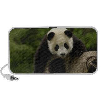 Giant panda baby Ailuropoda melanoleuca) 9 Mp3 Speakers