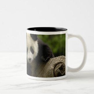 Giant panda baby Ailuropoda melanoleuca) 9 Coffee Mugs