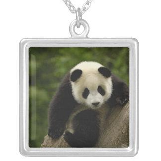 Giant panda baby Ailuropoda melanoleuca) 9 Necklaces
