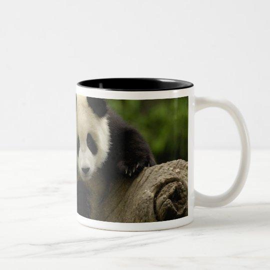 Giant panda baby Ailuropoda melanoleuca) 9 Two-Tone Coffee Mug