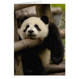 Giant panda baby Ailuropoda melanoleuca) Card