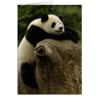 Giant panda baby (Ailuropoda melanoleuca) Card