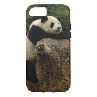 Giant panda baby (Ailuropoda melanoleuca) iPhone 8/7 Case