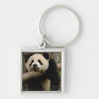 Giant panda baby Ailuropoda melanoleuca) Silver-Colored Square Keychain