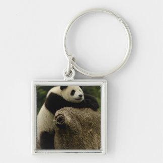Giant panda baby (Ailuropoda melanoleuca) Silver-Colored Square Keychain